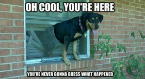 loldog-fail-welcome-home