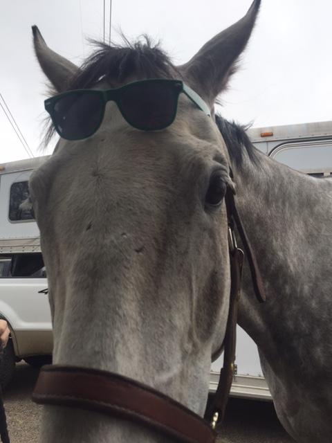 P Sunglasses