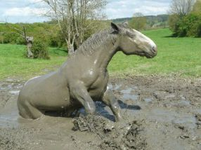 e61fa97ff9c2b1d1e68f25fdd736f169--mud-bath-dark-grey